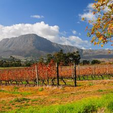 Cape, Wine, Garden Route & Safari 