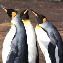 Falkland Islands Wildlife Experience