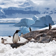 Antarctica Fly-Cruise