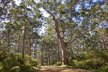 Bibbulmun Track Western Australia