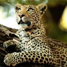 Big cats, wild dogs & elephants