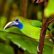 Birds & Beaches of Costa Rica