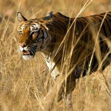 Rajasthan & the tigers of Madhya Pradesh