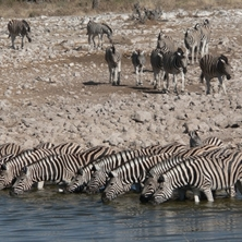 Namibia Air Safari