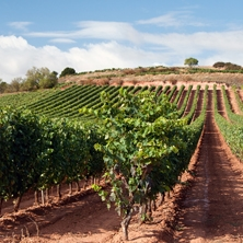 Flexible Rioja 4-day tour