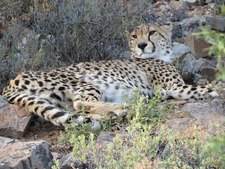 Burning bright: Sanbona Wildlife Reserve 