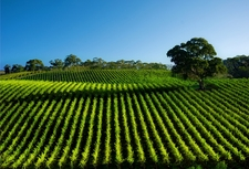Barossa and the best of South Australia