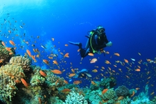 World&#39;s Top Dive Sites