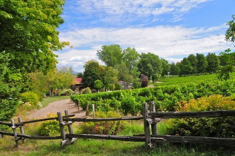 Quebec's Brome-Missisquoi Wine Route