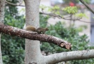 City Squirrel Searching For Forest, Hong Kong by  Carmen Wong