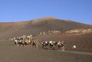 Camel trekking Tenerife, Spain by  Maria Doldgeva