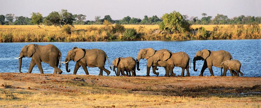 Botswana holidays and safaris