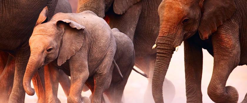 Etosha National Park safaris
