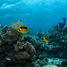 Red Sea
