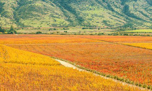 Colchagua Wine Valley, Chile