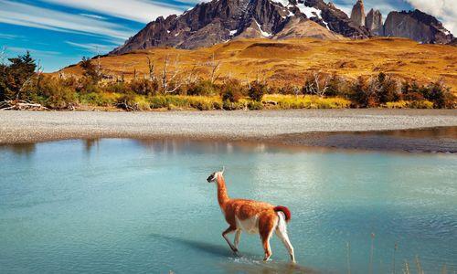 Guanaco, Torres del Paine National Park, Patagonia