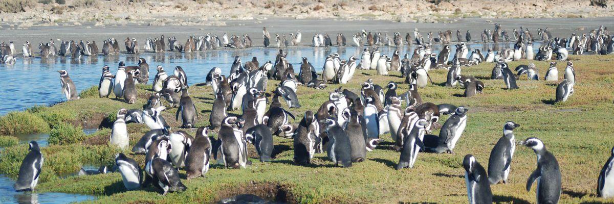 Bahía Bustamante, Argentina