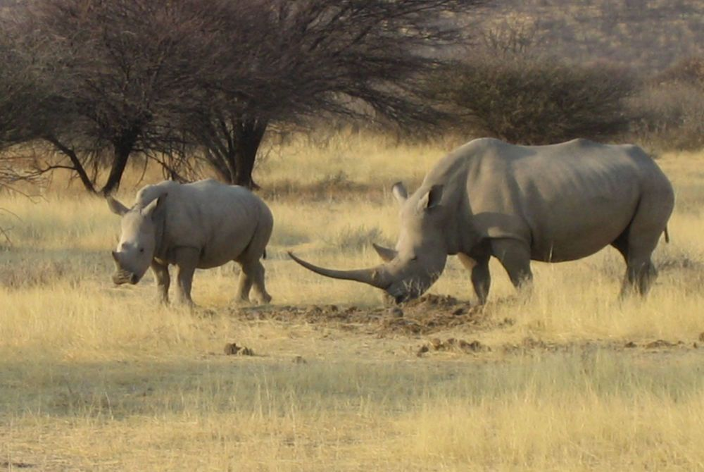 Alison Nicolle's photography of rhinos in Ongava, Namibia