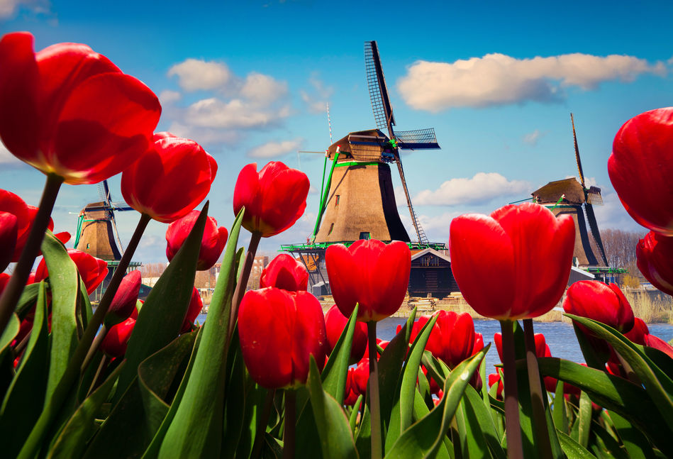 Uniworlds Holland and Belgium at Tulip Time river cruise