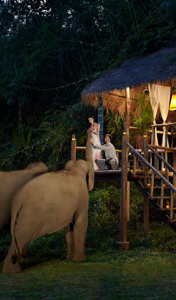 Accommodation and the resident elephants