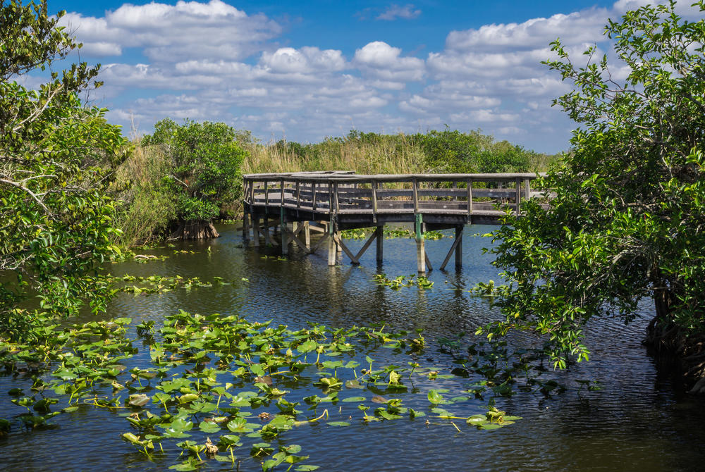 Bridge in the Florida Everglades