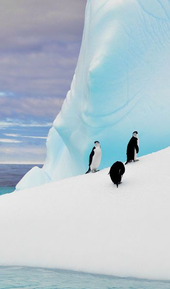 Penguins in the Antarctic seen on an Antarctic Air Cruise