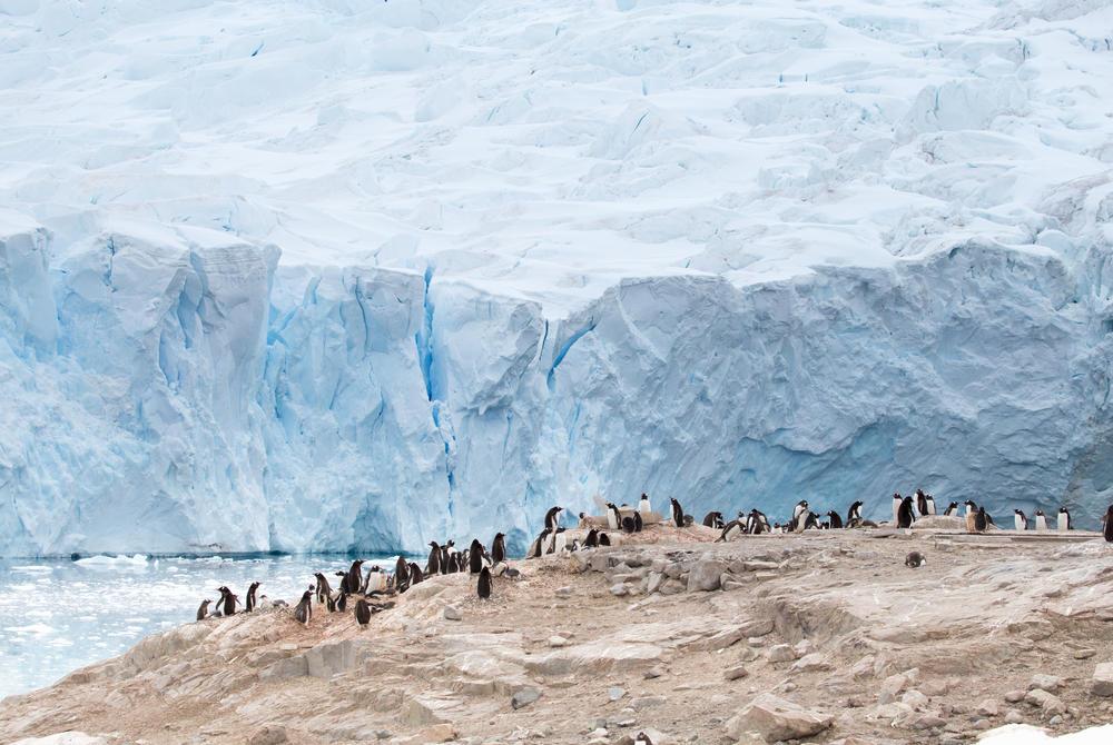 Penguin colonies in Antaractica