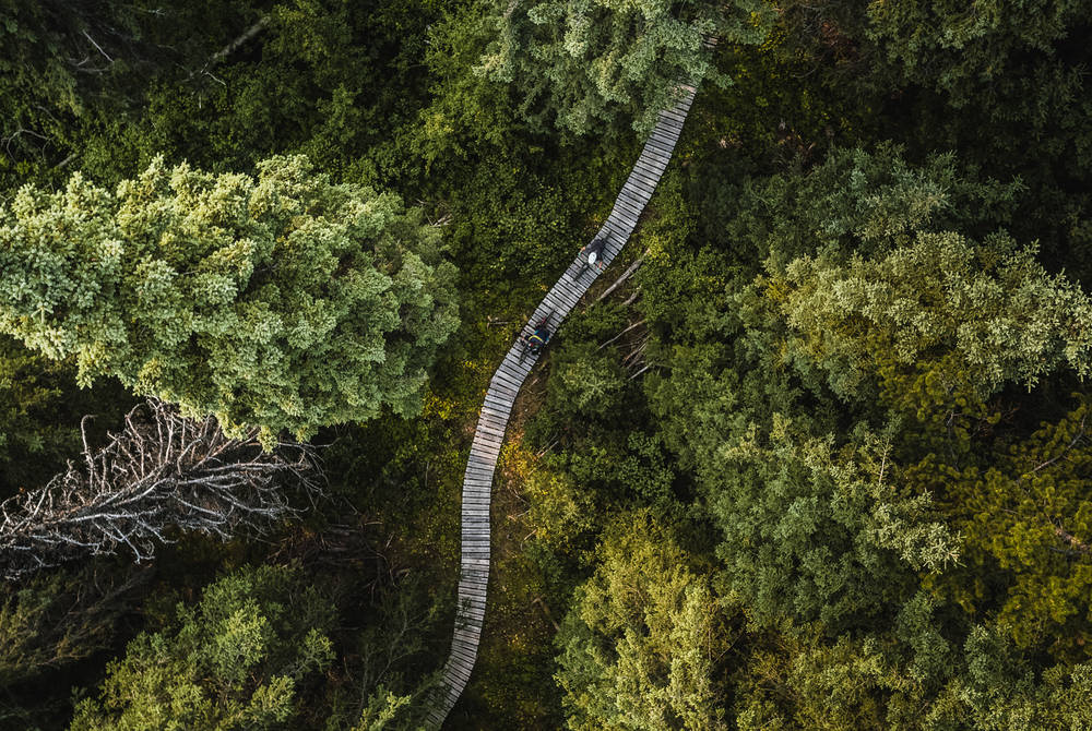 Aerial shot of boardwalk on Boer Mountain trails (Credit: Destination BC, Dave Silver)