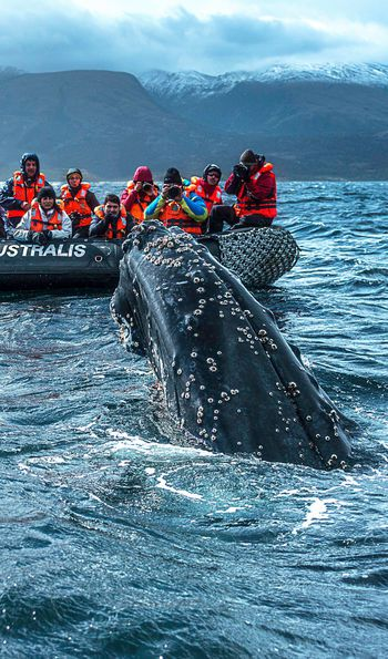 Whale watching excursion with Stella Australis