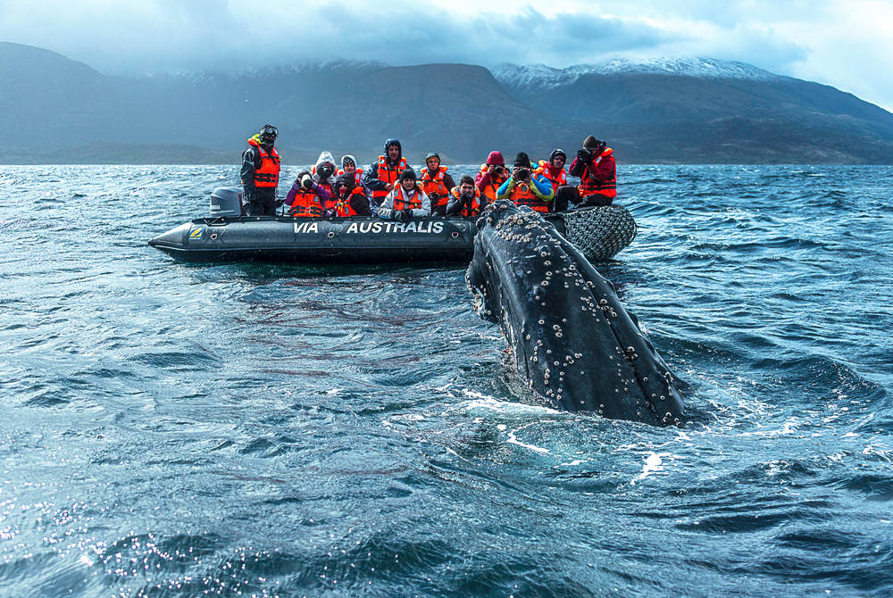Zodiac expedition, Australis Cruises