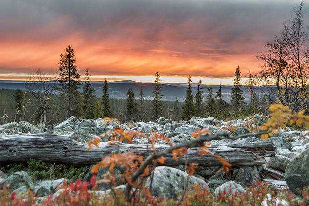 Autumn in Levi Finland