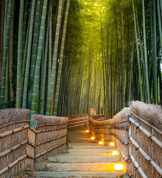 Bamboo walk in Kyoto, Japan