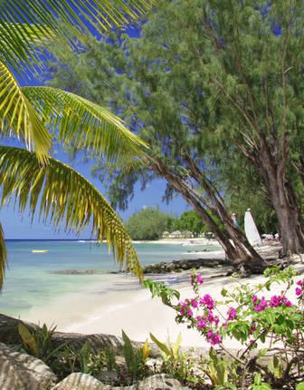 Beach, Coral Reef Club