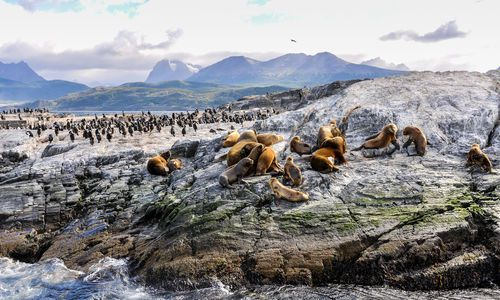 Beagle Channel, Chile–Argentina