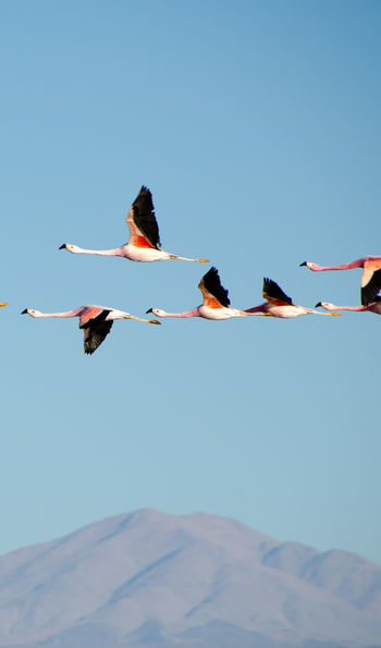Birds flying over the Atacama Desert in Chile
