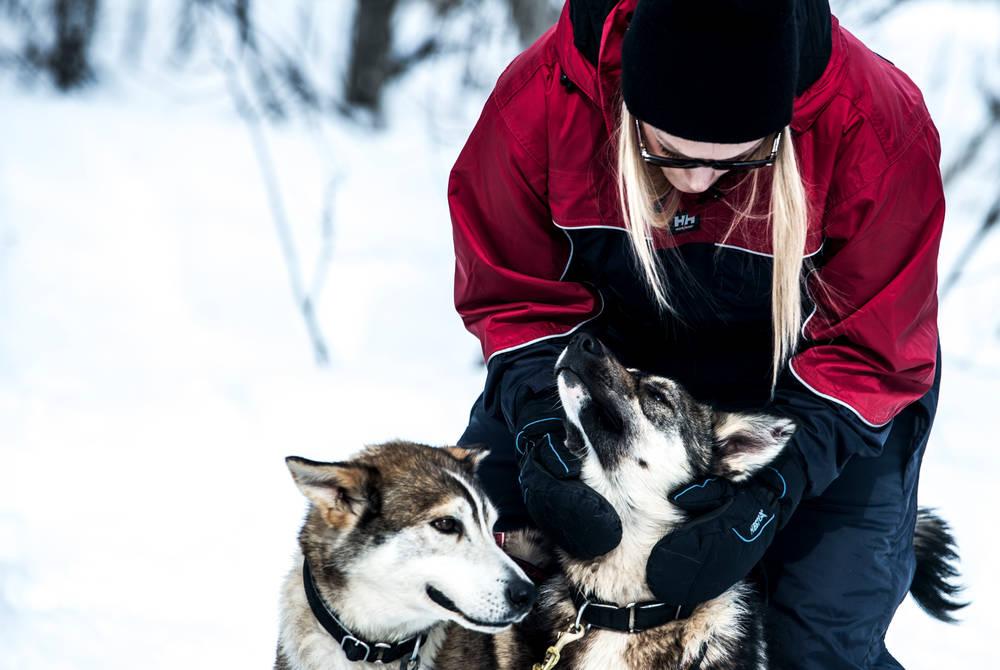 Dog sledding, Bjorkliden