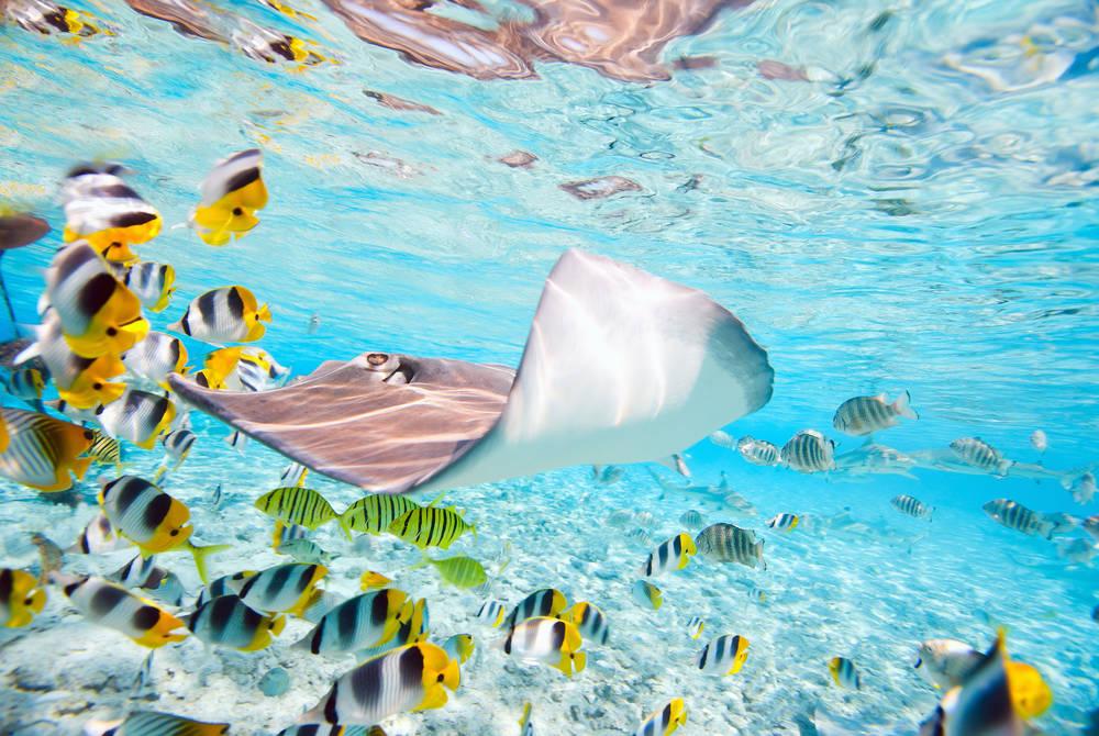 Marine life, Bora Bora, French Polynesia
