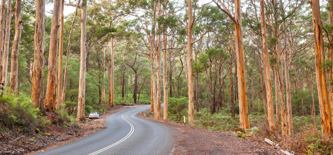 Boranup Karee Forest, Caves Road, Margaret River, Western Australia