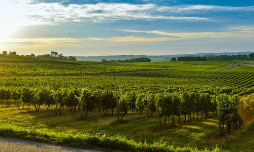 Bordeaux Vineyard-France, Aquitaine, Gironde