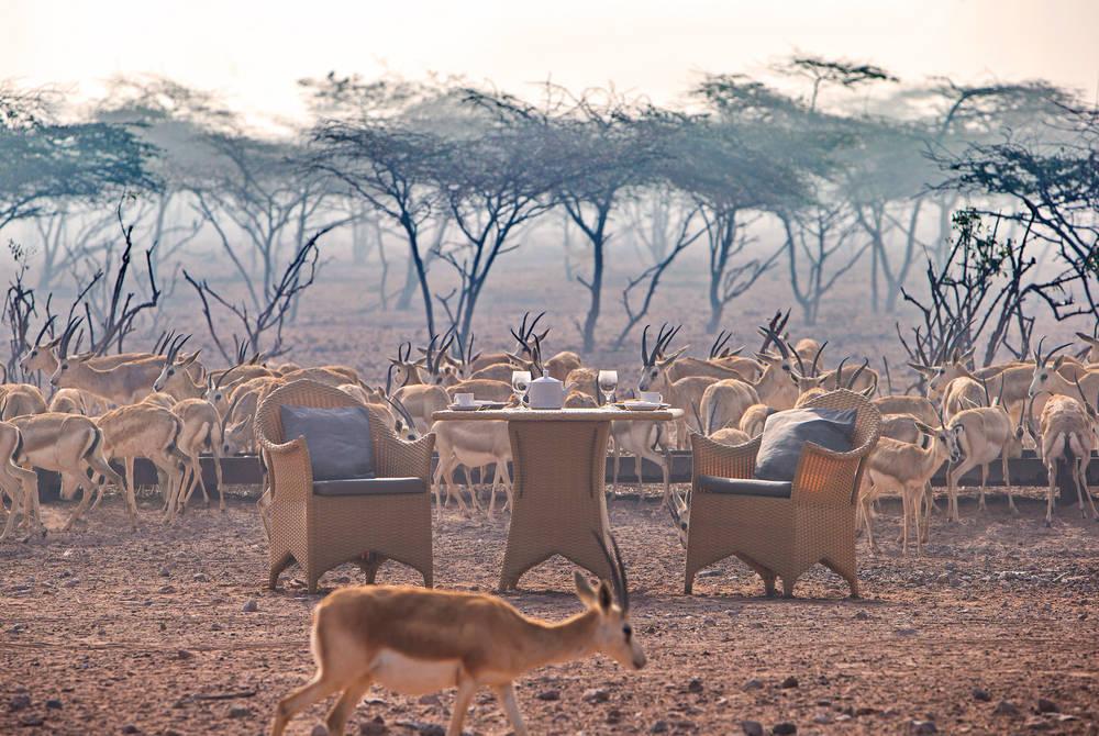 Breakfast with gazelles, Anantara Desert Islands Resort & Spa