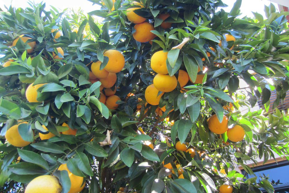 Breckenridge Lodge kitchen orchard, New Zealand