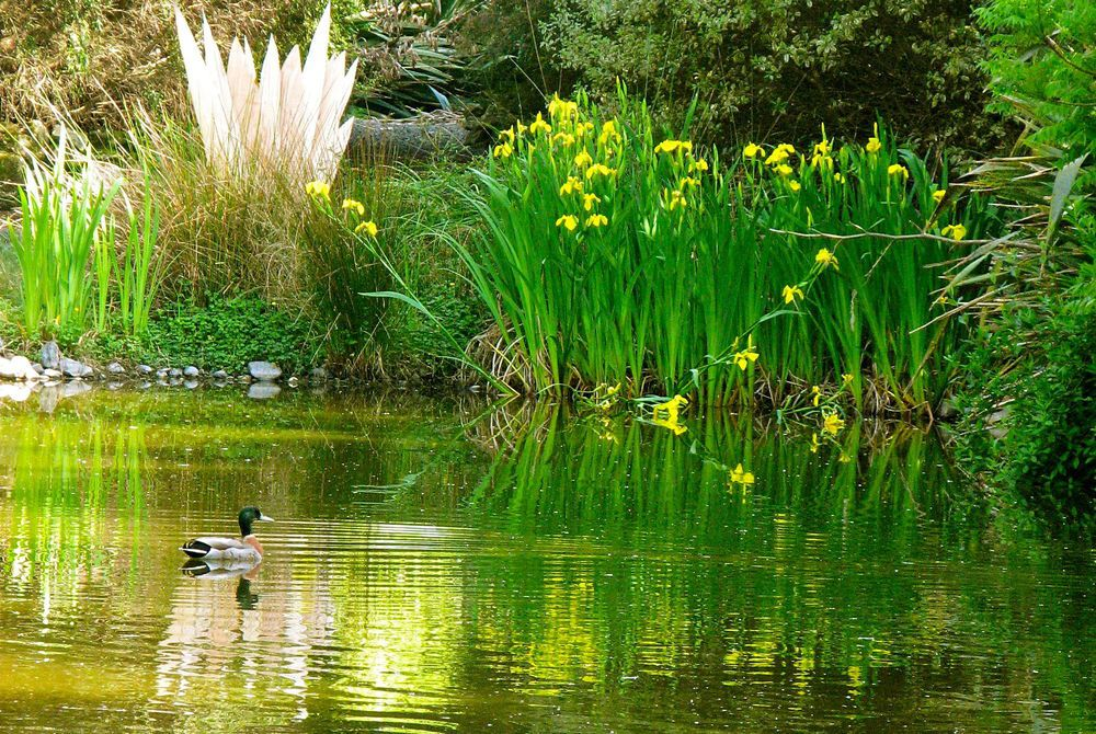 Breckenridge Lodge pond, New Zealand