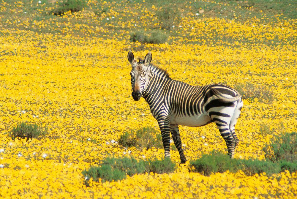 Bushman's Kloof Wilderness Reserve, Wildlife