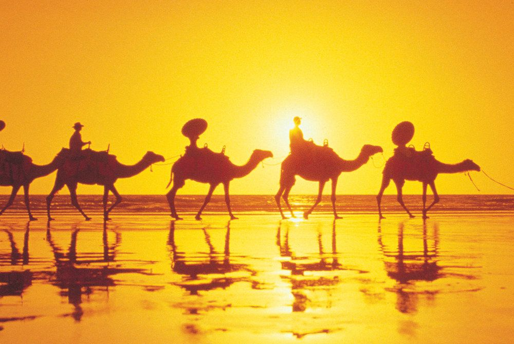 Cable Beach Club Resort & Spa, Camels at Sunset