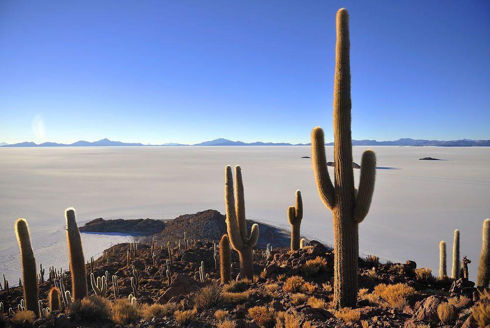 Cactus Island, Salar de Uyuni, Bolivia