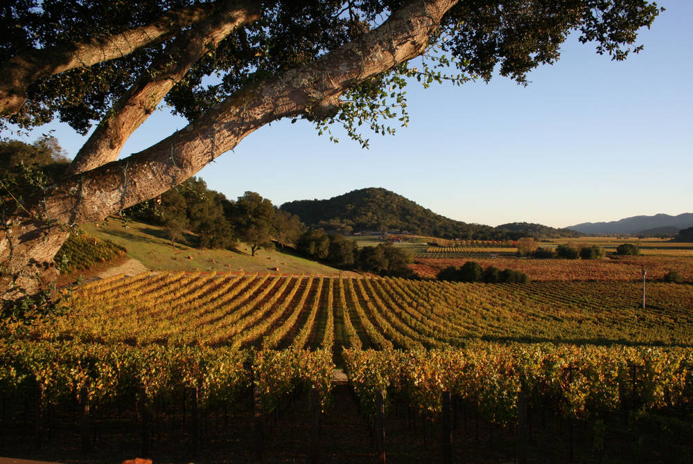 Surrounding vineyard, Calistoga Ranch, Napa