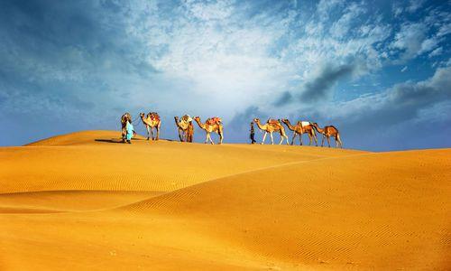 Camel safari, Dubai desert, UAE