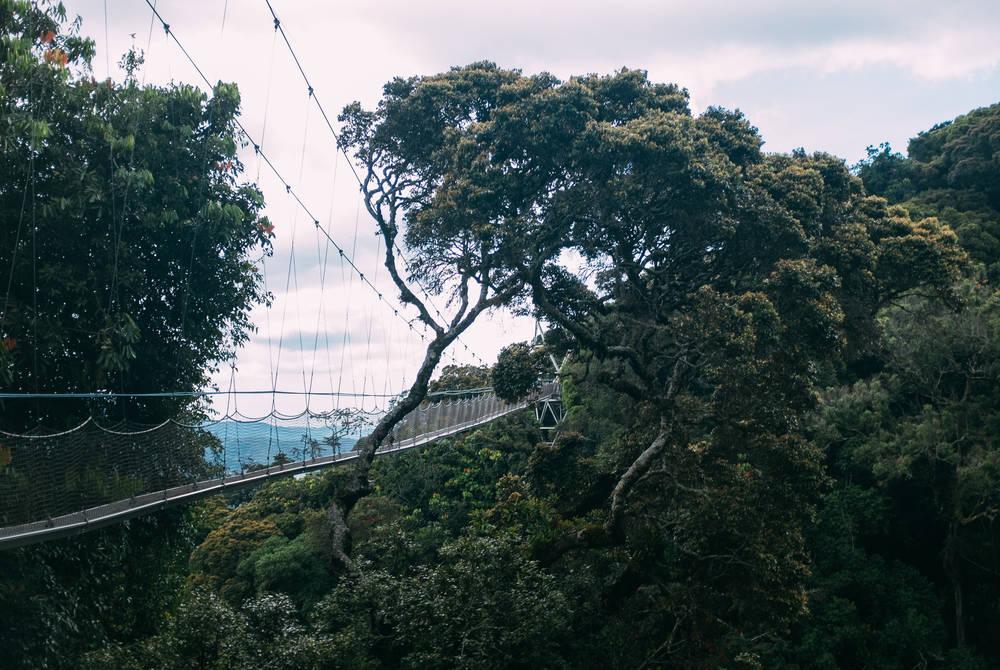 Canopy walk, Nyungwe National Park
