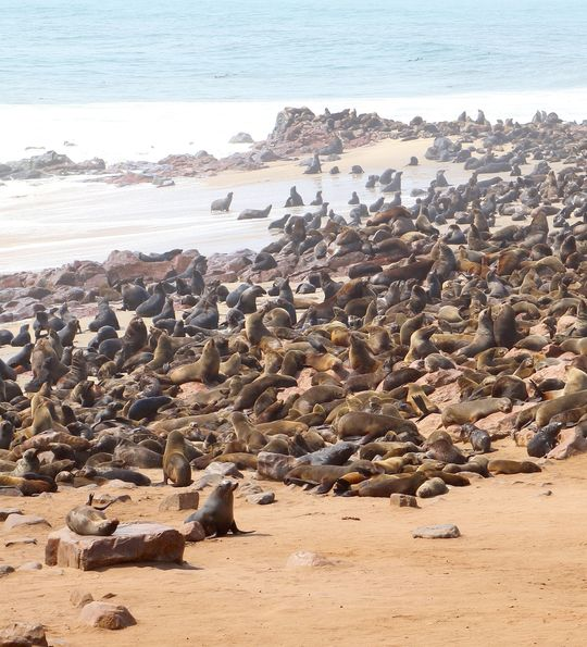 Cape Cross Seal Reserve, Skeleton Coast