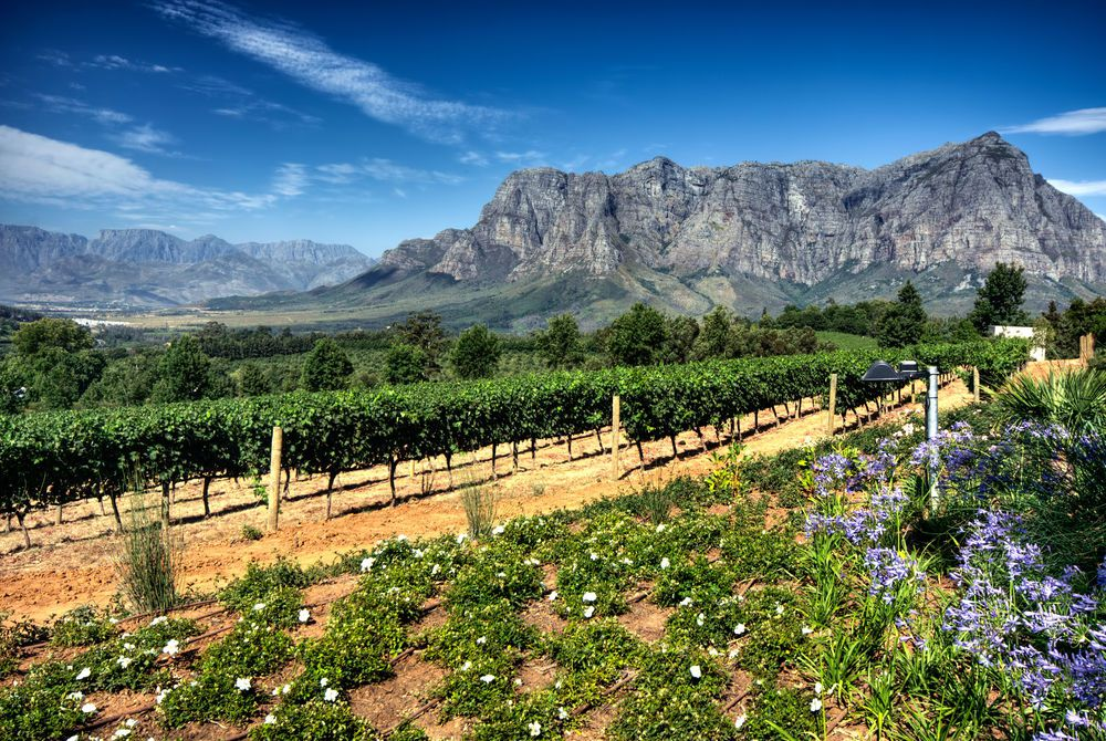 Cape Winelands, South Africa, Africa